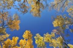 从下来看见的五颜六色的秋天树与空的中心 免版税库存图片