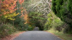 下来秋天和秋天乡下公路 免版税库存图片