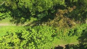 下来空中上面竞争在小径的小组赛跑者在绿色森林里 股票视频