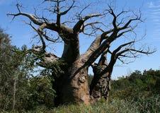 下来结构树增长 库存照片