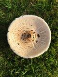 下来观点的一个圆的蘑菇 免版税库存照片