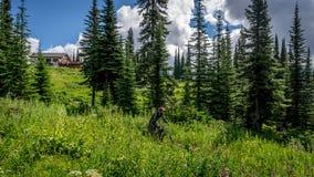 下来通过有高山花的草甸的山骑自行车的人 免版税库存图片