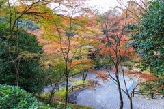 下来道路到一个公园有秋天树背景 库存图片