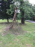 下来结构树增长 免版税库存照片