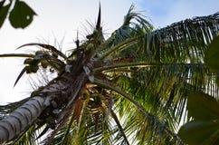 下棕榈树 库存图片