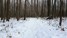下森林雪 股票录像