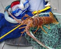 下潜多刺齿轮的龙虾 免版税库存图片