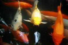 水下热带异乎寻常的鱼 中国旅行 库存图片