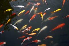 水下热带异乎寻常的鱼 中国旅行 免版税库存图片