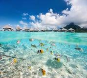 下热带海岛和水面上 库存图片