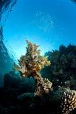 下珊瑚礁表面 库存图片