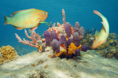 水下的世界五颜六色的热带鱼和海绵 库存照片