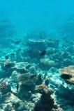 水下的世界马尔代夫 库存照片