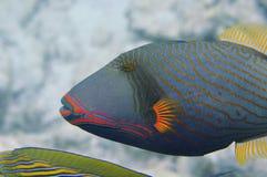 水下的世界马尔代夫 免版税库存照片