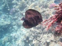 水下的世界 免版税图库摄影