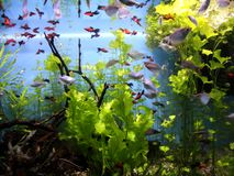 水下的世界Oceanarium在莫斯科 Moskvarium 库存图片