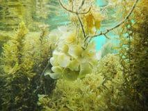 水下的人生的菲律宾 库存图片