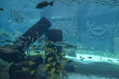水下的全景 库存图片