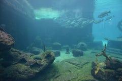 水下的全景 库存照片