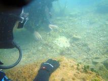 水下的发现 图库摄影