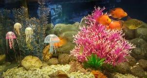 水下的场面、珊瑚礁、五颜六色的鱼和果冻在海洋 免版税库存图片