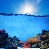 水下的场面。珊瑚礁,蓝天 免版税库存照片