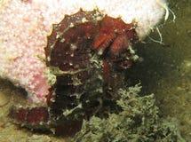 水下的宏观照片 免版税库存图片
