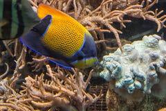 水下的射击,在水族馆的鱼 库存图片