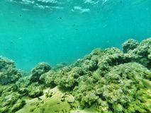 水下的岩石礁石 免版税图库摄影