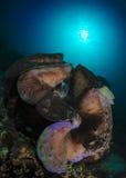 水下的巨型蛤蜊 库存照片