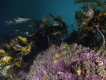 水下的斯瓦尔巴特群岛 库存照片