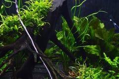 水下的植物 免版税库存照片