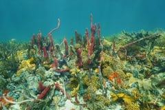 水下的海底五颜六色的海洋生物加勒比 免版税库存照片