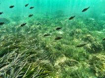 水下的海洋生物 库存照片