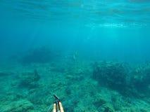 水下的渔 库存照片