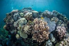 水下的热带生物多样性 库存照片