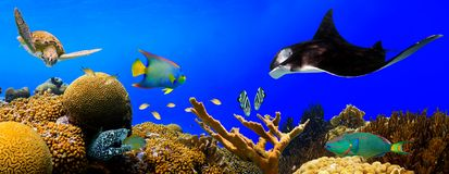 水下的热带礁石全景 免版税库存图片