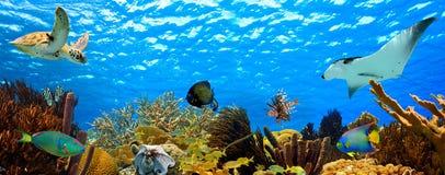 水下的热带礁石全景 免版税图库摄影