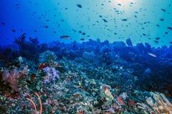 水下的珊瑚墙壁斐济 库存照片