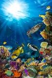 水下的珊瑚礁风景 免版税图库摄影