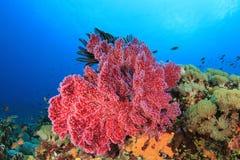 水下的珊瑚礁 免版税图库摄影