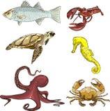 水下的生物 免版税库存图片