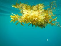 水下的生活,菲律宾 库存图片
