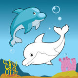 水下的生活:在蓝色海洋概述的微笑的海豚夫妇 免版税库存照片
