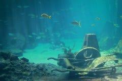 水下的生活 库存照片