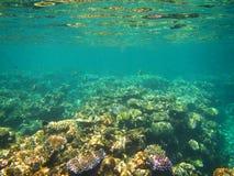 水下的看法,大堡礁,澳大利亚 免版税库存照片