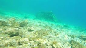 水下的英尺长度/鱼 影视素材