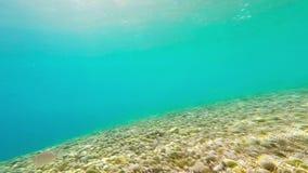 水下的英尺长度/鱼 股票录像