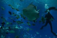 水下的观测所水族馆哺养的鱼 免版税库存照片