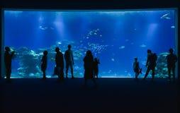 水下的观测所水族馆 免版税库存照片
